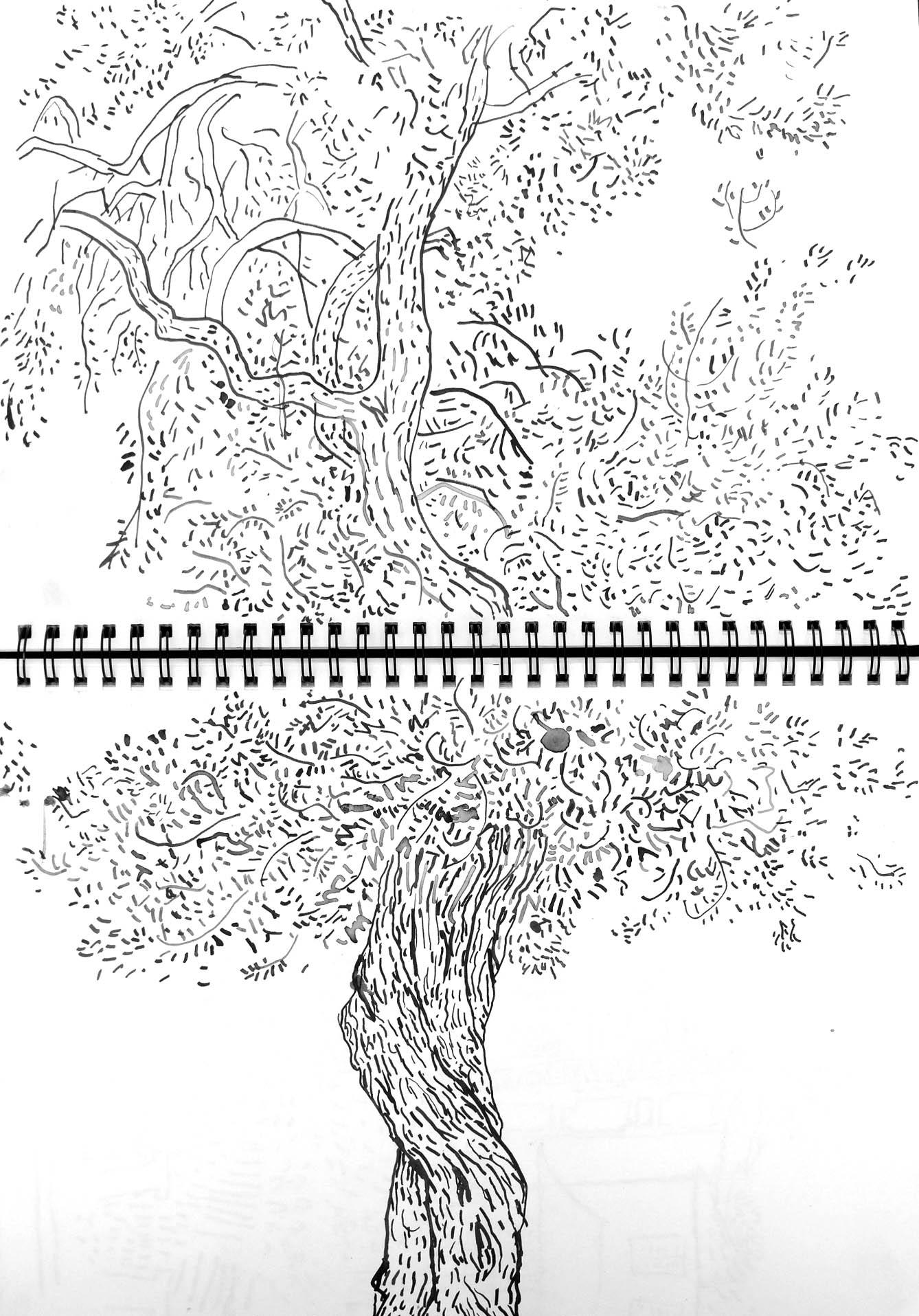 olivier6